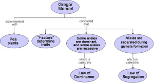02 Genetic's Flowchart
